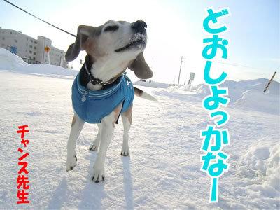 チャンスとティアラ+ココ-20120114-7.jpg