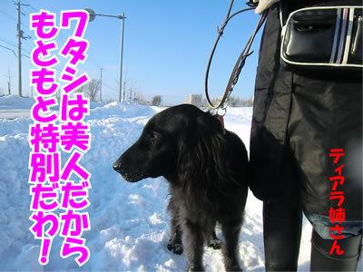 チャンスとティアラ+ココ-20120114-12.jpg