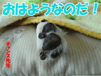 チャンスとティアラ+ココ-20120115-1.jpg