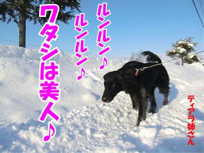 チャンスとティアラ+ココ-20120115-3.jpg