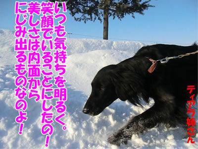 チャンスとティアラ+ココ-20120115-4.jpg