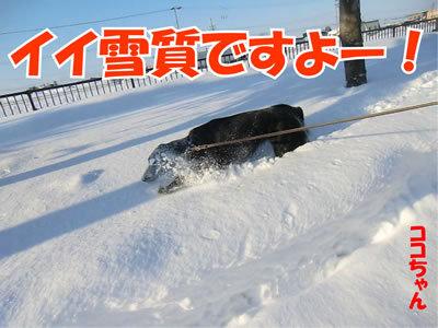チャンスとティアラ+ココ-20120115-5.jpg