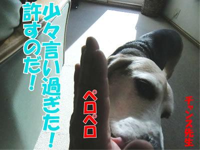 チャンスとティアラ+ココ-20120115-11.jpg