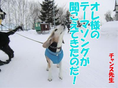 チャンスとティアラ+ココ-20120116-1.jpg