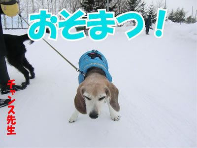 チャンスとティアラ+ココ-20120116-4.jpg