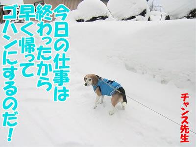 チャンスとティアラ+ココ-20120116-7.jpg