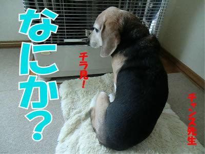 チャンスとティアラ+ココ-20120117-1.jpg