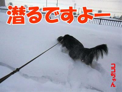 チャンスとティアラ+ココ-20120117-3.jpg