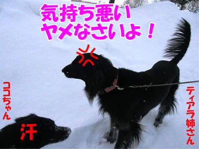 チャンスとティアラ+ココ-20120117-5.jpg