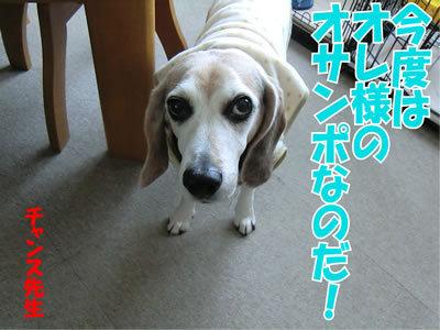 チャンスとティアラ+ココ-20120117-9.jpg