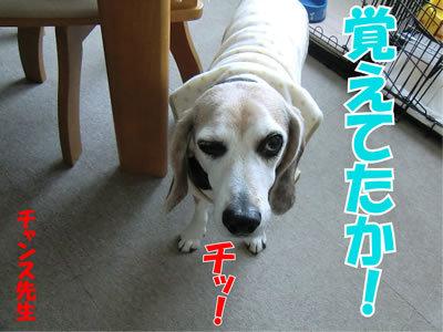 チャンスとティアラ+ココ-20120117-10.jpg