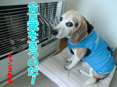 チャンスとティアラ+ココ-20120118-1.jpg