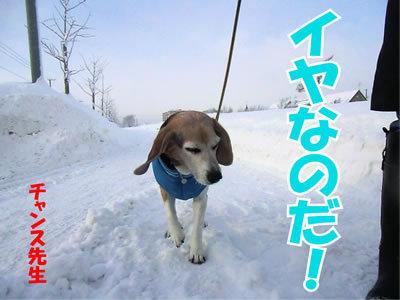 チャンスとティアラ+ココ-20120118-6.jpg