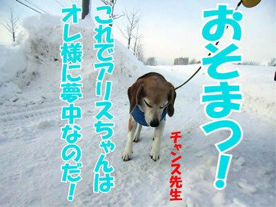 チャンスとティアラ+ココ-20120118-11.jpg