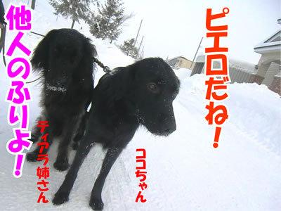 チャンスとティアラ+ココ-20120118-12.jpg
