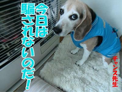 チャンスとティアラ+ココ-20120119-1.jpg