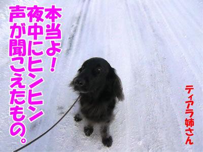 チャンスとティアラ+ココ-20120119-5.jpg