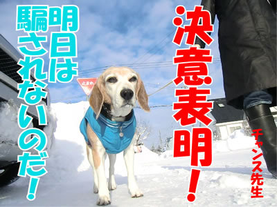 チャンスとティアラ+ココ-20120119-6.jpg