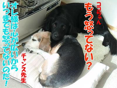 チャンスとティアラ+ココ-20120119-8.jpg