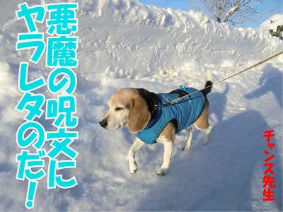 チャンスとティアラ+ココ-20120120-3.jpg