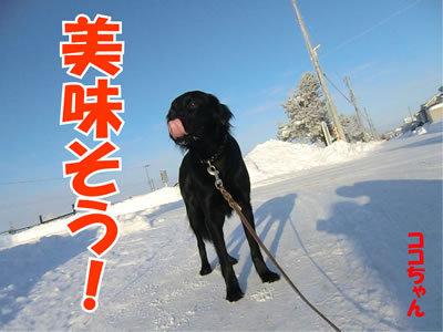 チャンスとティアラ+ココ-20120120-5.jpg