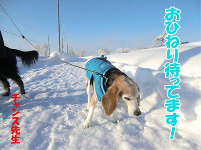 チャンスとティアラ+ココ-20120120-8.jpg