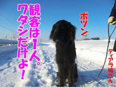チャンスとティアラ+ココ-20120120-9.jpg
