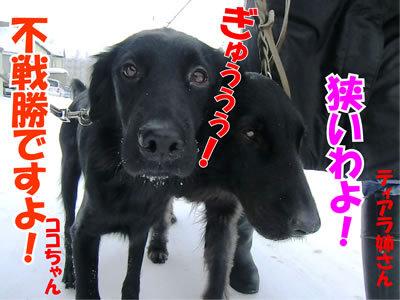 チャンスとティアラ+ココ-20120122-3.jpg