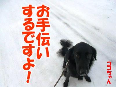 チャンスとティアラ+ココ-20120122-4.jpg