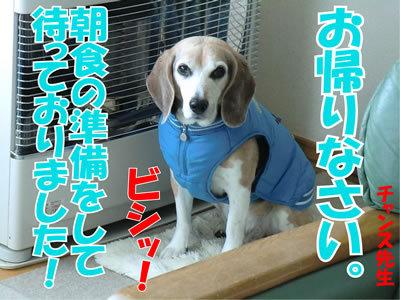 チャンスとティアラ+ココ-20120122-6.jpg