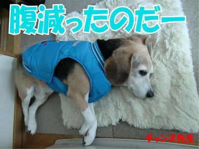 チャンスとティアラ+ココ-20120122-7.jpg