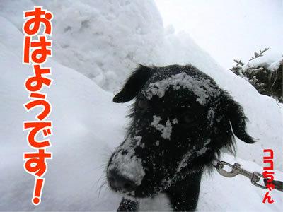 チャンスとティアラ+ココ-20120123-2.jpg