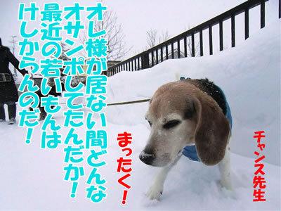 チャンスとティアラ+ココ-20120123-5.jpg