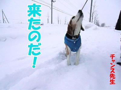 チャンスとティアラ+ココ-20120123-6.jpg