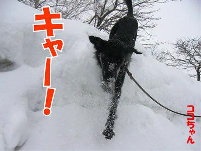 チャンスとティアラ+ココ-20120123-11.jpg