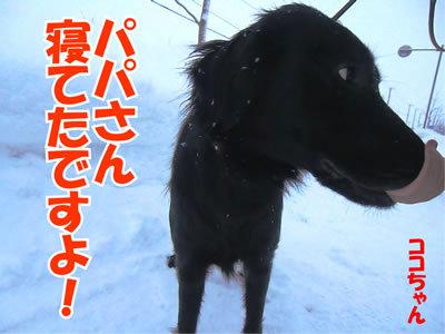 チャンスとティアラ+ココ-20120124-1.jpg