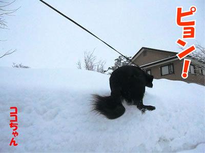 チャンスとティアラ+ココ-20120124-2.jpg