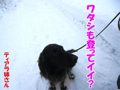 チャンスとティアラ+ココ-20120124-4.jpg
