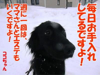 チャンスとティアラ+ココ-20120124-7.jpg
