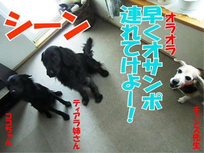 チャンスとティアラ+ココ-20120124-8.jpg