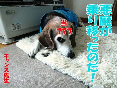 チャンスとティアラ+ココ-20120124-9.jpg