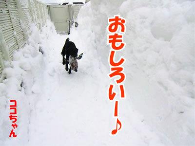 チャンスとティアラ+ココ-20120125-1.jpg