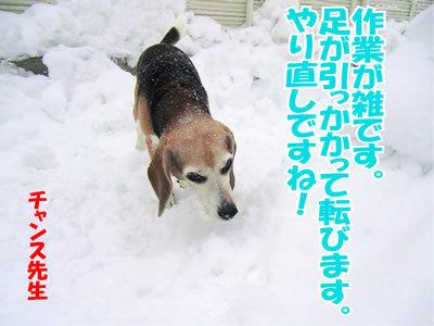 チャンスとティアラ+ココ-20120125-2.jpg