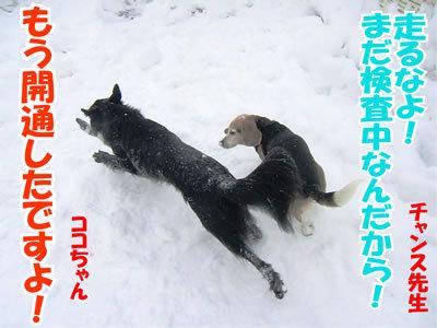 チャンスとティアラ+ココ-20120125-3.jpg