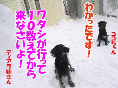 チャンスとティアラ+ココ-20120125-5.jpg