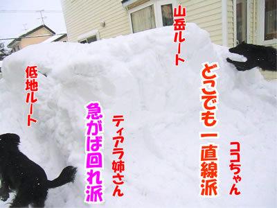 チャンスとティアラ+ココ-20120125-6.jpg