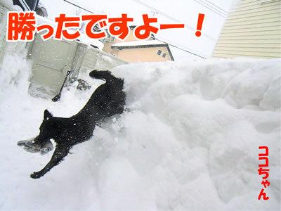 チャンスとティアラ+ココ-20120125-7.jpg