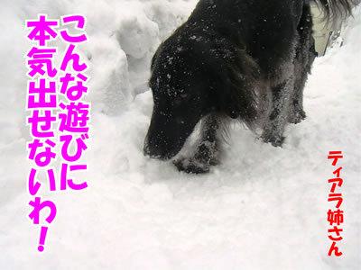 チャンスとティアラ+ココ-20120125-8.jpg