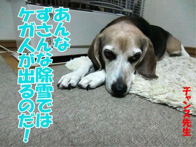 チャンスとティアラ+ココ-20120125-10.jpg