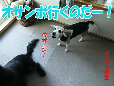 チャンスとティアラ+ココ-20120126-1.jpg